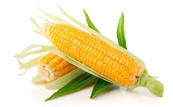 Купить семена гибридов кукурузы