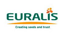 Купить семена гибридов подсолнечника терра