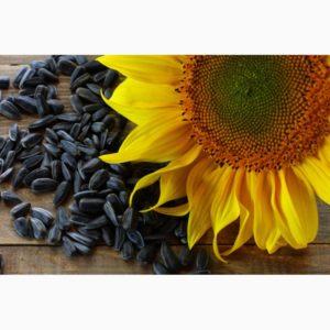 Семена Надежда подсолнечник цены оптом