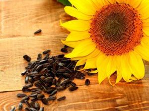 Купить семена подсолнечника оптом НС Х 6016