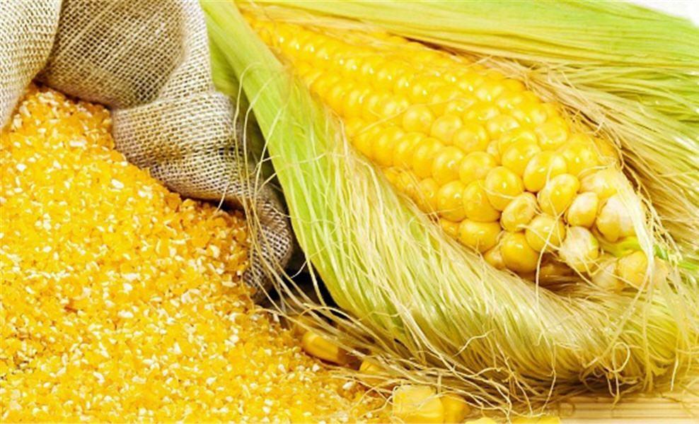 Семена кукурузы Ладожский Воронеж Агро