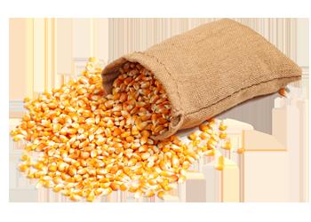 Семена кукурузы оптом в России
