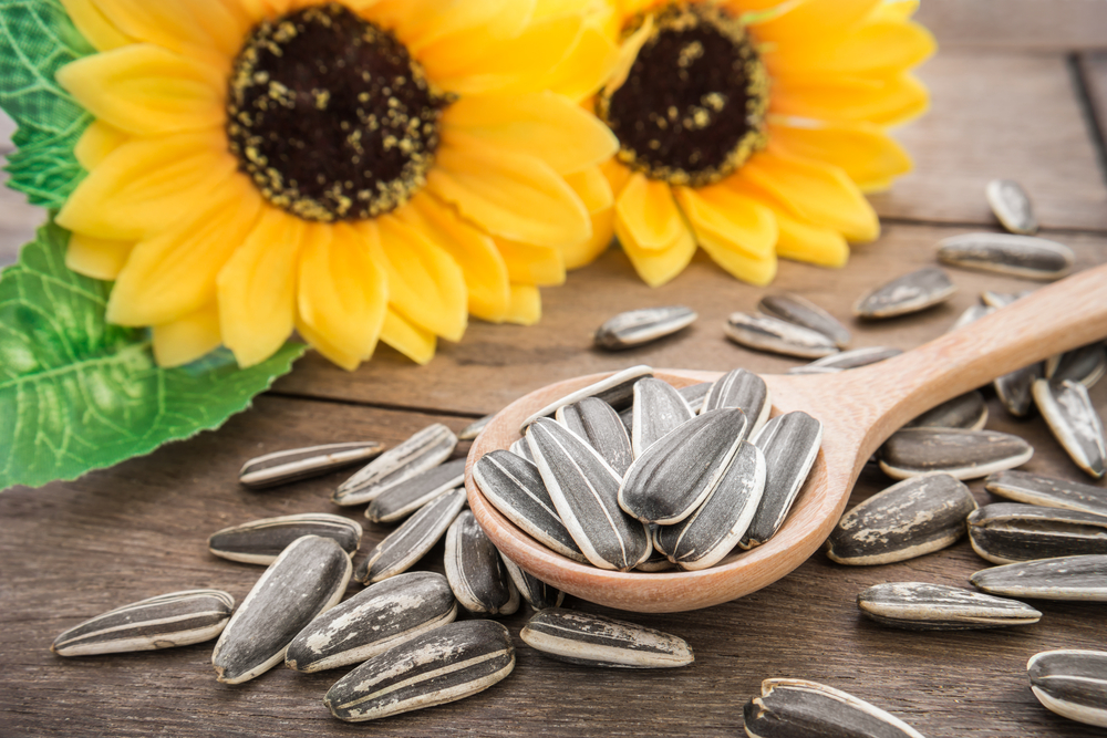 Семена подсолнечника оптом цена