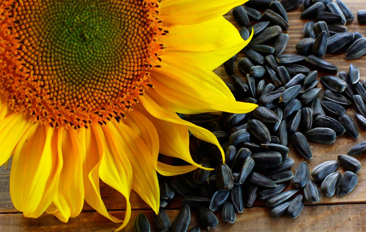 Семена подсолнечника оптом