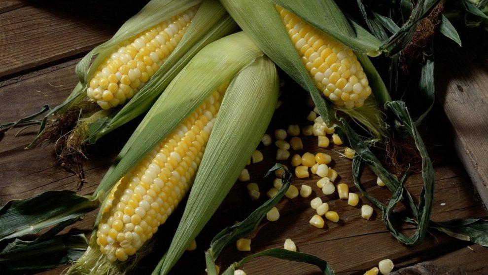 Семена кукурузы оптом Россия