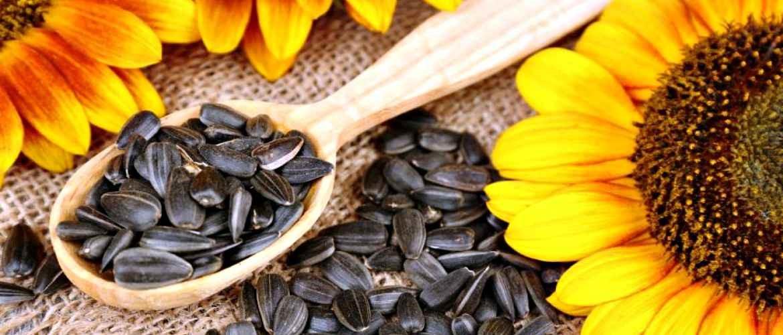 Семена подсолнечника оптом цена за тонну