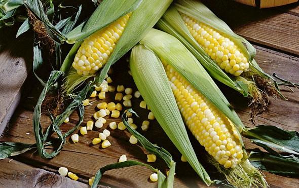 Купить семена гибридов - сорта кукурузы