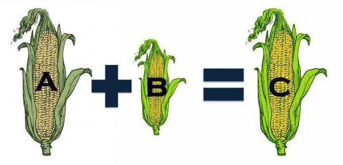 Купить семена гибридные кукурузы