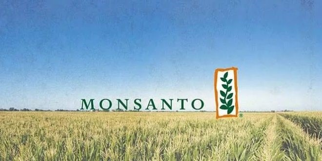 Семена кукурузы производитель Монсанто