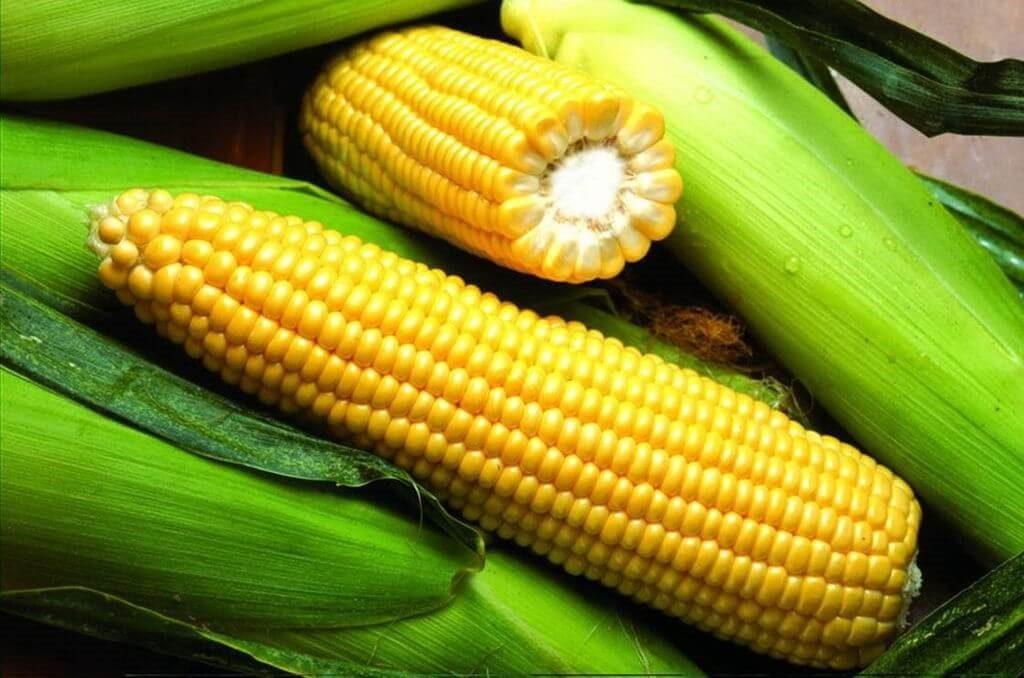 где купить семена кукурузы гибриды