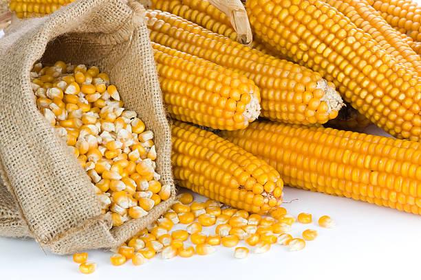 Созревшие семена кукурузы купить оптом