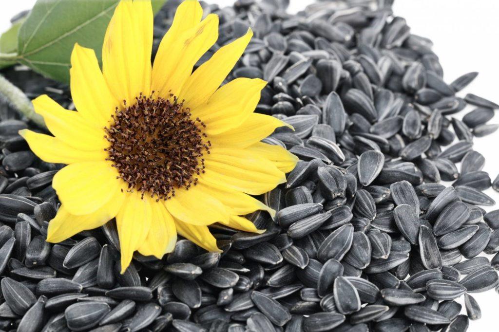 Цены семена подсолнечника опт