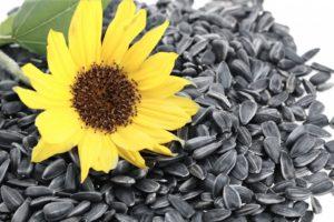 semena-podsolnechnika