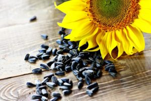 подсолнечник семена гибридов купить урожай