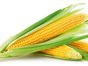 где приобрести оптом семена кукурузы злаки